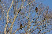 Patient Vultures