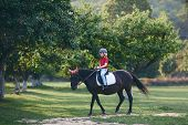 Cute Young Rider On Horseback Enjoying Horse Riding At Summer Garden poster