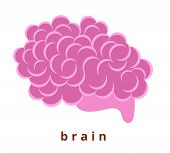 Human Internal Organ - Realistic Brain With The Name. Anatomy. Pink Human Brain. Human Body Part. Mo poster