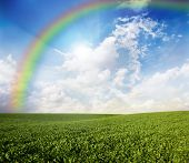 Green meadow under blue sky with a rainbow