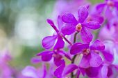 Orchid Flowe At Winter Or Spring Day. Lovely Spring Orchid Flowers. Spring Flower Landscape. Spring  poster