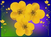 stock photo of buttercup  - illustration with golden buttercup flowers - JPG