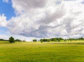 Oilseed rape field under dramatic sky
