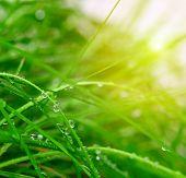 Fondo de hierba verde suave