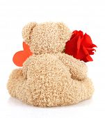 Picture of brown furry Teddy bear with red beautiful rose and heart-shaped greeting card isolated on white background, back side of cute soft toy, Valentine day holiday, romantic gift, love concept poster