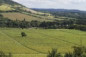 picture of dork  - Range of hills the North Downs at Box Hill - JPG