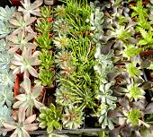 foto of xeriscape  - An assortment of succulent or cacti plants that grow in desert climates or that are used in xeriscaping - JPG