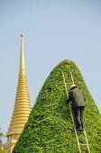 Bangkok, Thailand - Royal Palace and Wat Phra Kaeo Complex - gardener trimming a tree