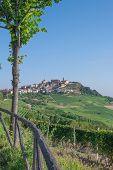 La Morra,Piedmont,Italy
