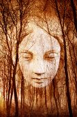image of supernatural  - Ghostly female face materialising in misty haunted forest - JPG