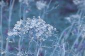 Blue Dried Flowers