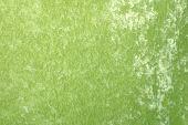 Green Velveteen