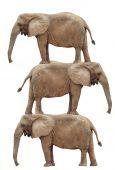 Pilha de elefante