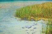 Juncus, Lago Di Venere In Pantelleria