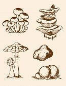 Vintage Hand Drawn Forest Mushrooms
