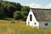 stock photo of dairy barn  - Cows in the pasture with a barn and silo in the background - JPG