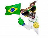 soccer dog from rio