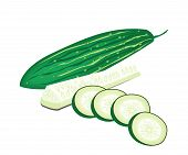 image of marrow  - Vegetable and Herb Vector Illustration of Marrow Slices and Marrow Sticks Isolated on White Background - JPG