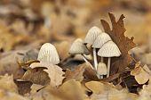 Mushroom Group In Moorland