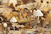 Mushroom In Moorland