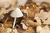 One Mushroom In Moorland