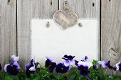 Blank muslin sign with purple flowers (pansies)