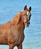 Portrait of a horse against the sea.