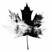 Grunge Maple Leaf - Black.jpg