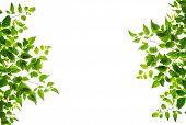Green Leaf Isolate