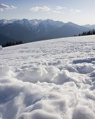 foto of olympic mountains  - Vertical Photo of Hurricane Ridge with Olympic Mountains in Background