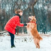 young woman play with her dog golden retriever on the snow