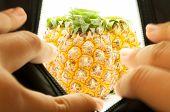 The Secret Of  Pineapple