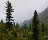 Mountain Woodlands In Rainy Weather