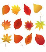 A collection of autumn leaves