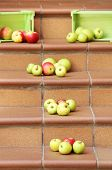 Juicy apples scattered on the stairs