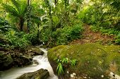 picture of wild adventure  - Waterfall in the wild jungle in the borderland of Panama and Colombia - JPG