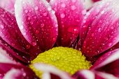 Close Up Of Water Droplets On Flowers