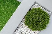 picture of combinations  - Landscaping combinations of green plant and grass - JPG