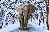 Elephant walking in snowy park scenery