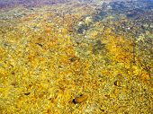 River Water With Yellow Rocks