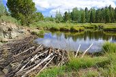 Beaver pond in the mountains