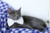 Cat and bow on purple blanket on light background