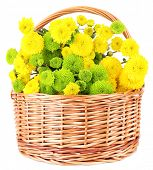 Beautiful bouquet of chrysanthemums flowers in wicker basket, isolated on white