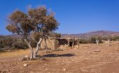 Farm animal shelter and olive trees in a semi-desert area of the Akamas Peninsula Cyprus
