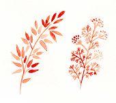 Decorative set of autumn floral elements. Watercolor drawing.