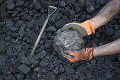 Coal Miner Showing