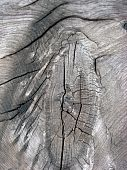 Texture Of Fence Weathered Wood poster