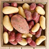 Variety Of Potatos
