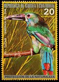 Equatorial Guinea  - Circa 1980: A Stamp Printed In Equatorial Guinea Shows Tropical Bird , Circa 19