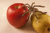 picture of creepy crawlies  - Isolated apple and pear with a spider on a background - JPG